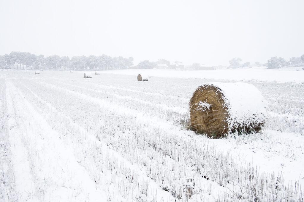 0126_PacoLopez_Paisaje-de-invierno_WEB.jpg