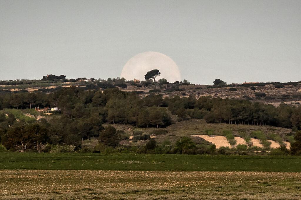 0325_Carlos-Hernandez-El-pino-y-la-luna_Web.jpg