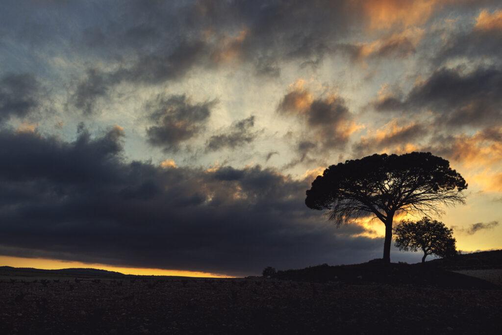 0530-RosaArnedo-Luces-y-sombras-web.jpg