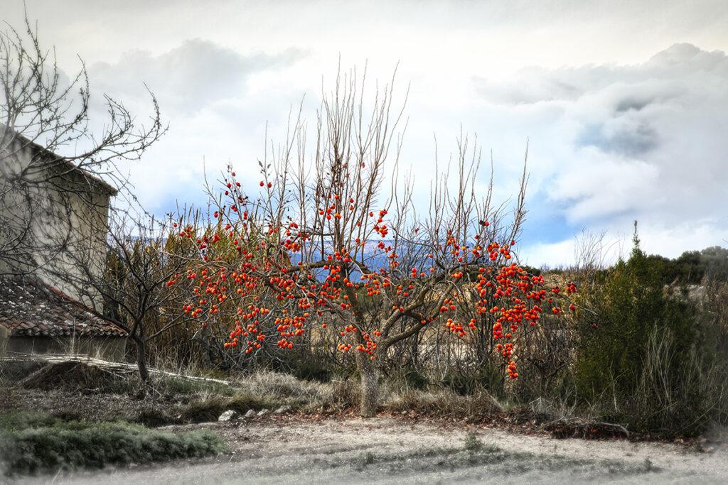 1222_MAHuerta_Arbol-de-Navidad_web.jpg
